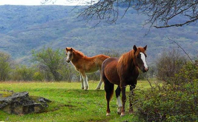actividades-en-rascafria-y-valle-del-paular-16