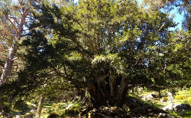 naturaleza-en-rascafria-y-el-valle-del-paular-7