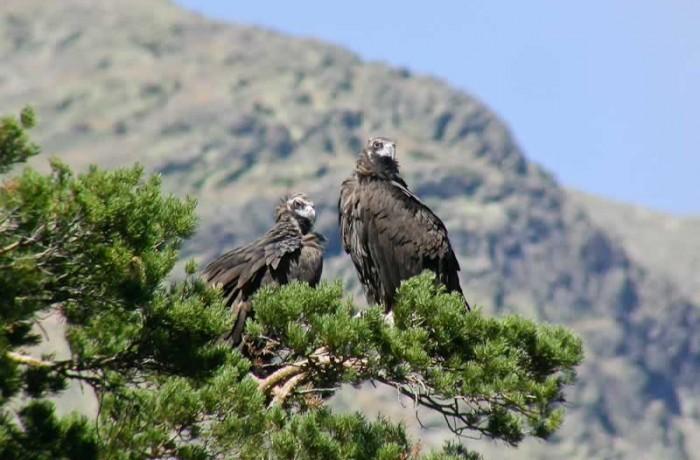 Avistamiento de aves en Rascafria