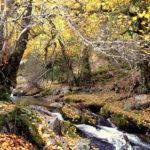 El río Lozoya nace en Rascafria. Valle de El Paular