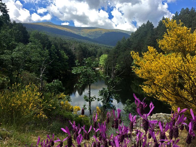 La presa del Pradillo con las flores de primavera